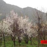 فروش باغ و باغچه در جاده چالوس