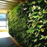 باغچه عمودی-دیوار سبز