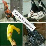 خرید و فروش پرنده و حیوانات در مشهد و اطراف