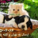 غذای سگ و گربه_پخش عمده غذای خشک سگ و گربه