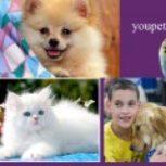 خرید و فروش انواع سگ و گربه، طوطی٬، همسترو سنجاب