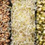 خط تولید مواد غذایی با سرمایه گذاری کم وبهره بری عالی