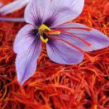 زعفران خالص و طبیعی