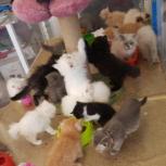 فروش تعداد زیادی بچه گربه در انواع نژاد و رنگ