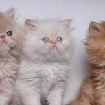 حراج نمایشگاه مرکزی تهران با 200 گربه پرشین