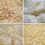 راه اندازی خط تولید آرد جوانه (جوانه وپودر جوانه)